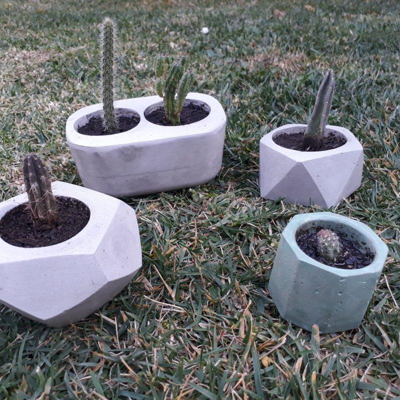 Cactus y suculentas_7