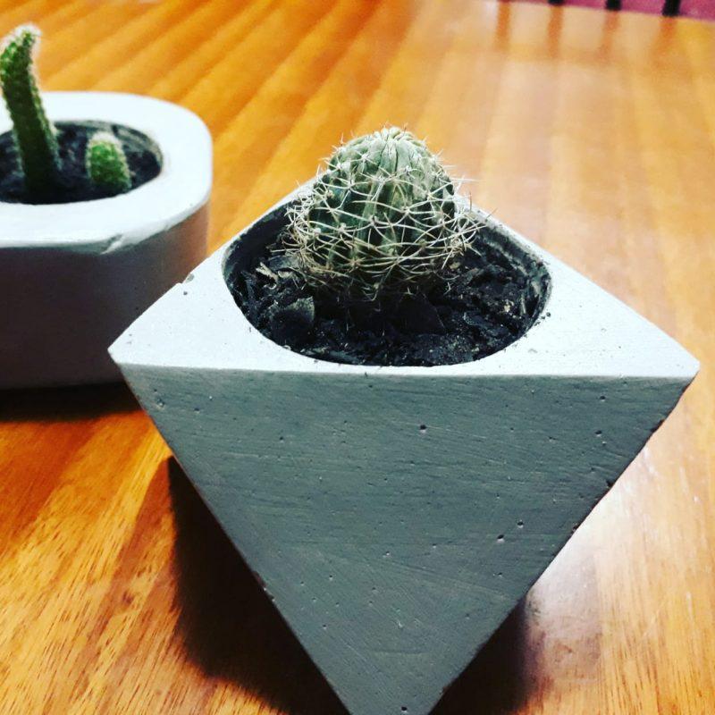 Cactus y suculentas_3